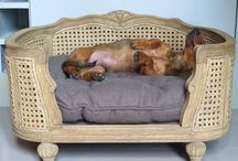 LORD LOU - Shopping for Maitai dachshund Milo / Lord Lou luxury pet furniture Arthur - shopping for Maitai