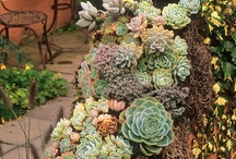 suculente succulents wall framed arrangement plants