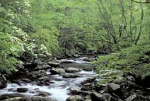 GSMNP / by Kelly Dubree