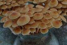 Выращенные грибы