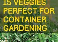 Vegetable garden containers