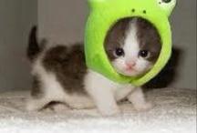 cutesy cutesy