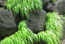 Great grasses