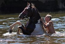 Horses / by Wanda Barcus