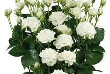 Becky's February wedding / Some flower ideas