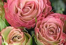 Just Roses / Natures stunning beauty