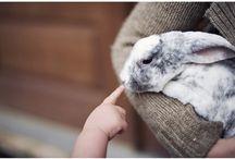 rabbit :)
