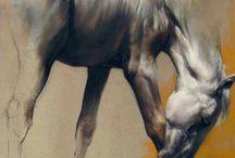 cavalos net