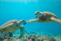 Turtle Canyons / Snorkelling & Diving this spot on Oahu is great!