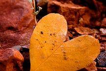 Leaf / by Jenn Palomo