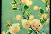flowering / flowers  / by Molly Stankovsky
