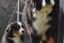 Honden en puppies