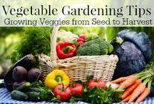 heirloom vegetable