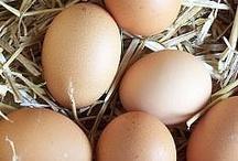Homestead eggs / by Nancy Chadbourn