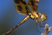 Insects / Up close and personal looks at some of the bugs around us