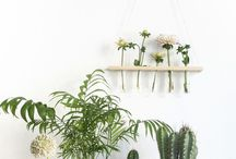 Pretty plants / I love fresh flowers and pretty plants