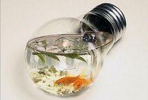home   fishy fish