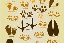 animals footprint track