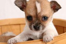 Puppies / by Brett Weller