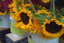 Farmers markets / Beautiful displays of fabulous produce around the globe