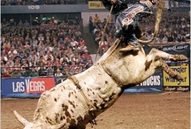 Rodeo / by Desiree Foster
