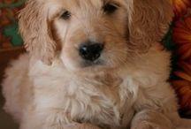 Cute puppies / by Kris Perkins