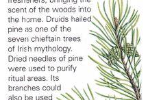 Keltische Bäume