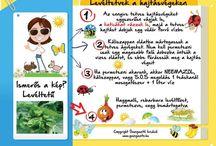 Kerti ültetéshez tanácsok