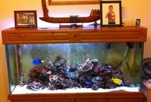 acuario casa