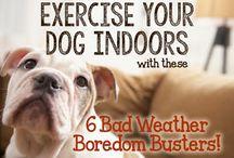 Dog exercising at home
