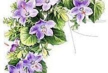 цветы FLORAL