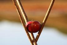 Forbidden fruit / Sculpture
