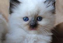Cutie Cats...