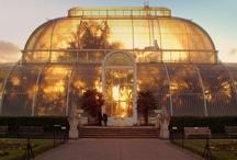 Local glasshouses - cake inspiration