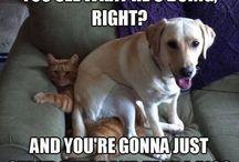 Pet Humor