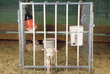 Creep gate 1