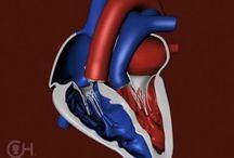 Heart stuff❤️