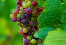 Vinmakeri / Winemaking