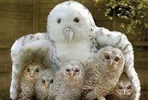Family of owl