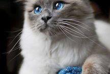 Cat Kedi kitten katty