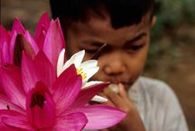 Cambogia / Visita di Angkor