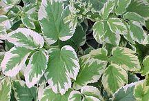 References plantes