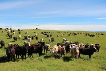 The Uptake Difference / Helping farmers manage their soil, plant and animal health.