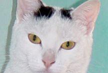 Cat ...  =^.^=  MORGANA / gatta bianca/nera