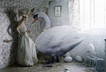 Swan Love <3