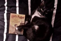 Book and Cat / Harry Potter book and cat.