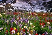Blooms / by Ann Hoag