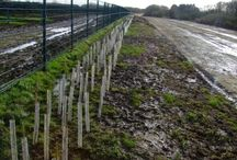The Solar Farm Case Study / Tree and hedgerow planting before, during and after to help disguise a solar farm.