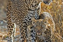Wildlife | Africa | South Africa