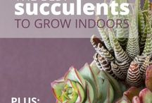Garden / Tips and tricks in gardening